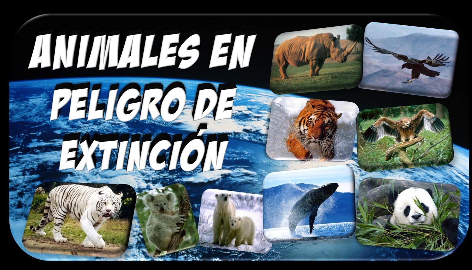 imagenes de los animales en peligro de extincion - 14 animales en peligro de extinción Bits en Imagen