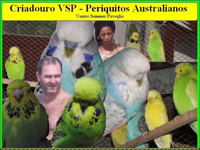 Periquitos Australianos-Criador VSP