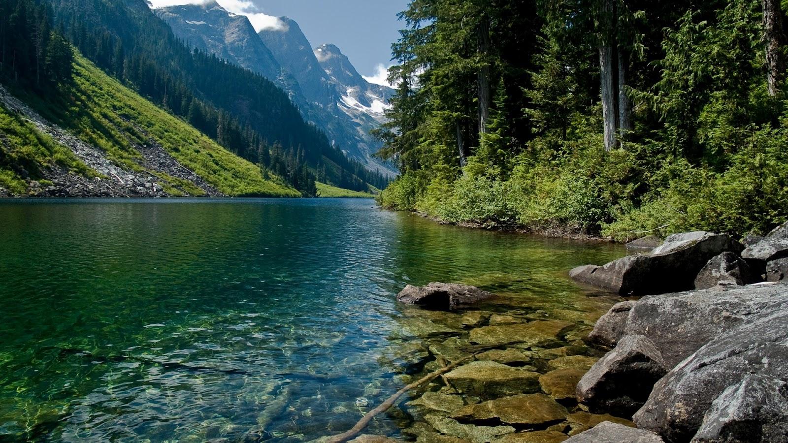 Foto, picture, Красивые фотографии хвойных лесов мира для рабочего стола, о