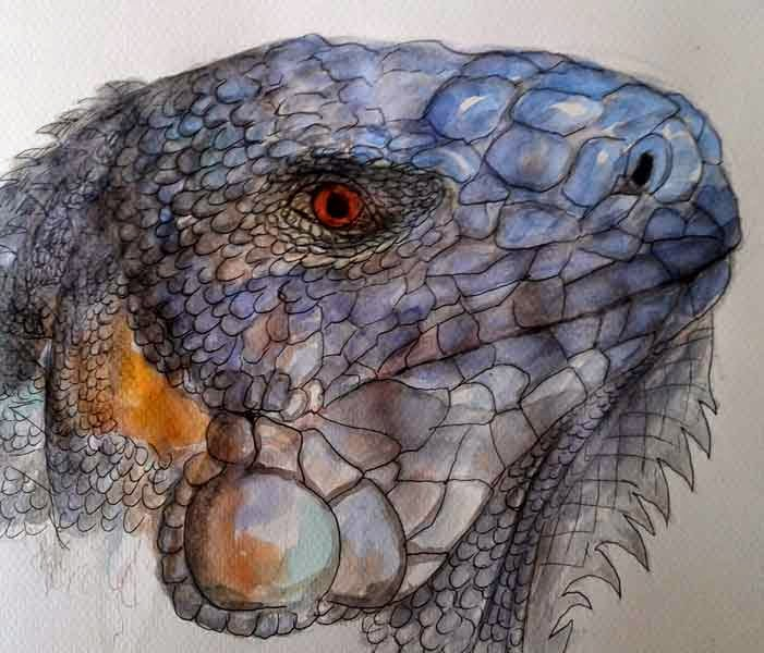 iguana watercolor indian ink