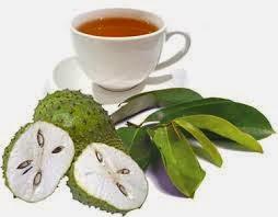 manfaat kandungan buah daun sirsak berkhasiat obati penyakit