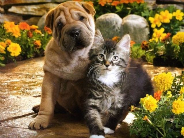 Cute Cats And Dogs Together