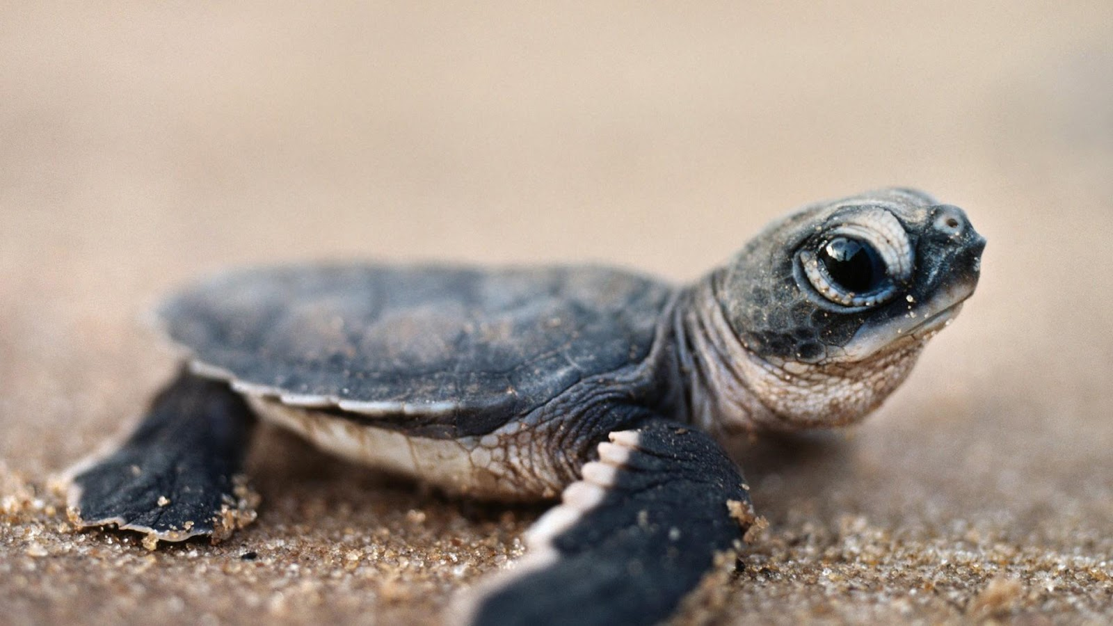 Animal facts: Turtles