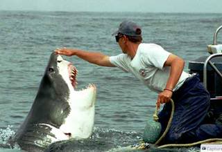 Kisah Nyata - Persahabatan Seorang Nelayan Dengan Hiu