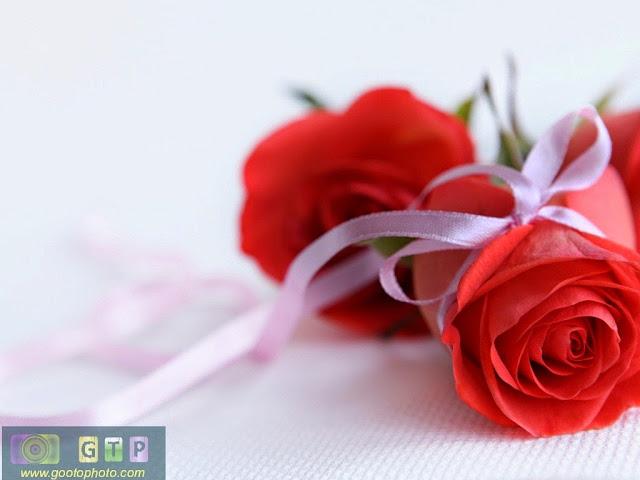 صور ورد احمر ورد جوري رومانسي