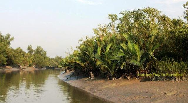 Beautiful Sundarban