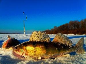 Зимняя ловля судака троллингом