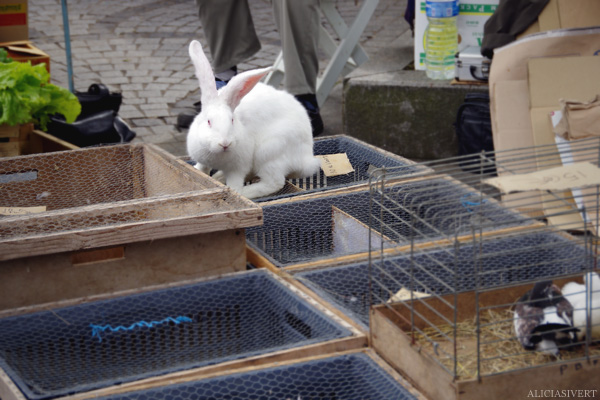 aliciasivert, alicia sivertsson, Le Nebourg, market day, livestock, marknad, marknadsdag, rabbit, bunny, kanin, kaniner