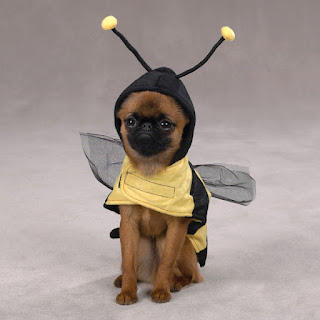 Honey Bee Dog Costumes $18.99