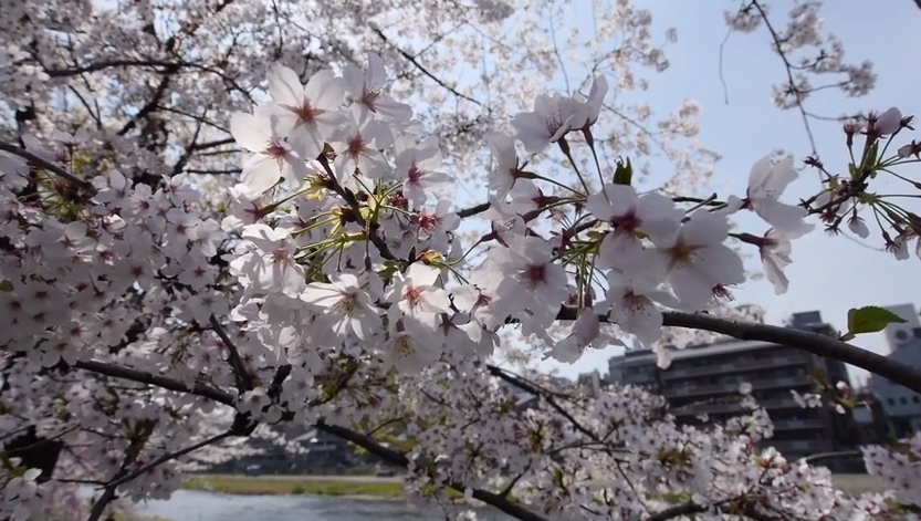 Lima Perkara Unik Tentang Jepun