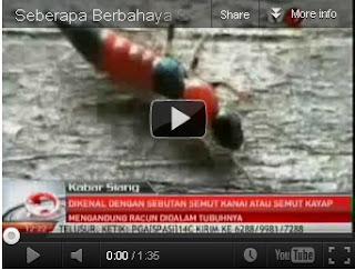 Melihat Video Serangga Tomcat dan Cara Mengatasinya