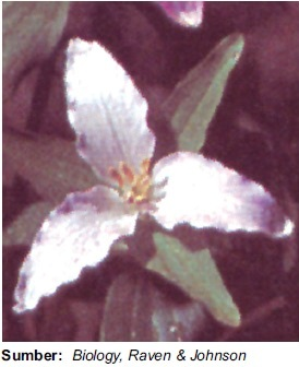 Struktur fungsi gambar dan bagian bunga bunga tumbuhan monokotil ccuart Choice Image
