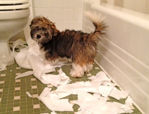 dog playing with toilet paper Found on Two Dog With Love