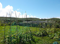 St Ives Cornwall Allotment