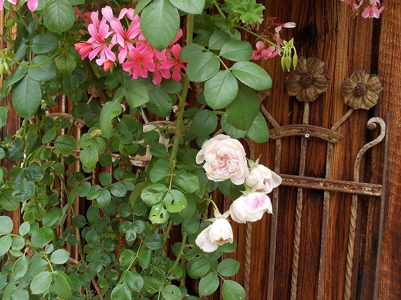 Rosenreslis traum junigarten und eine besondere t r for Rostiges eisen im garten