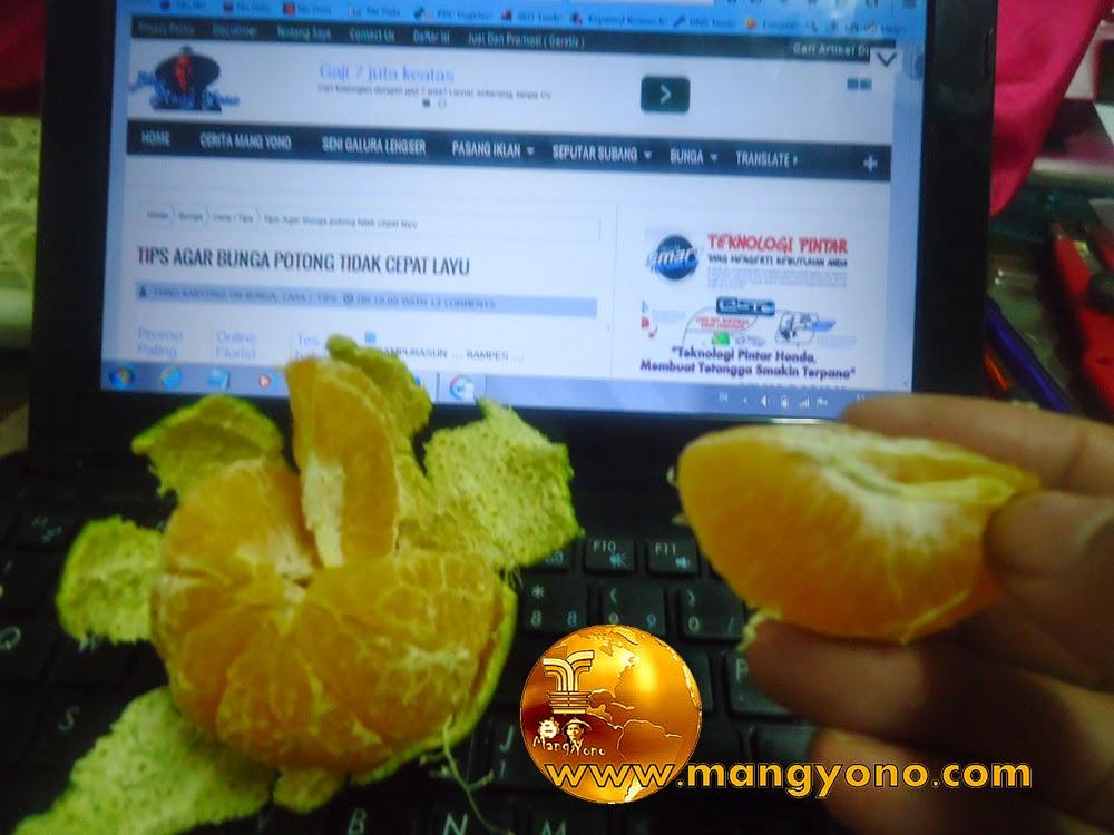 Sambil ngeblog sambil makan jeruk ... Khan cocok ya?...