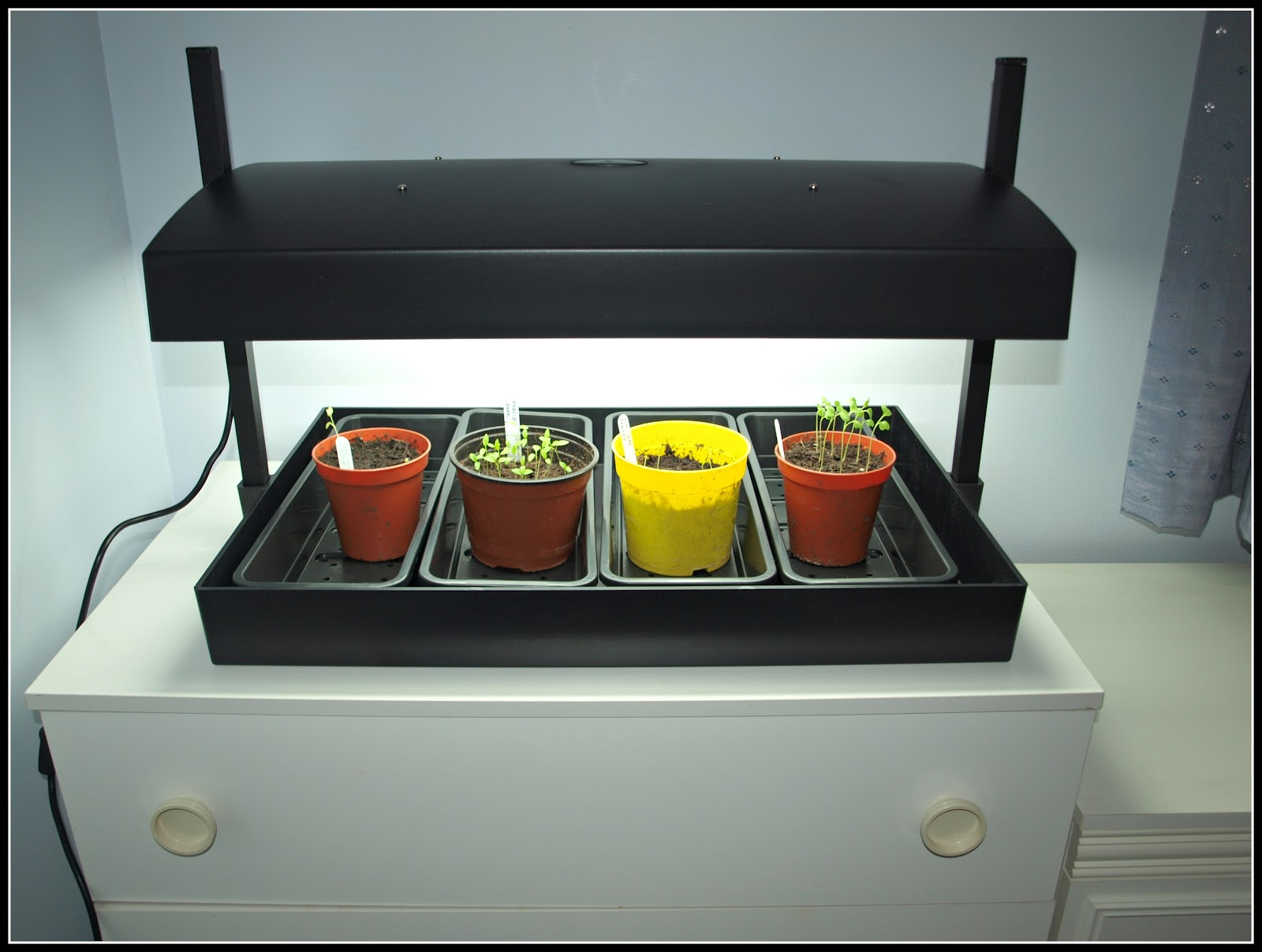 Kitchen Grow Lights Marks Veg Plot Growlights