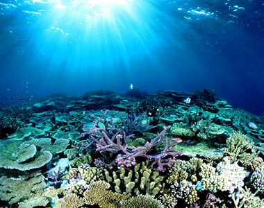 beautiful places in the world The Great Barrier Reef