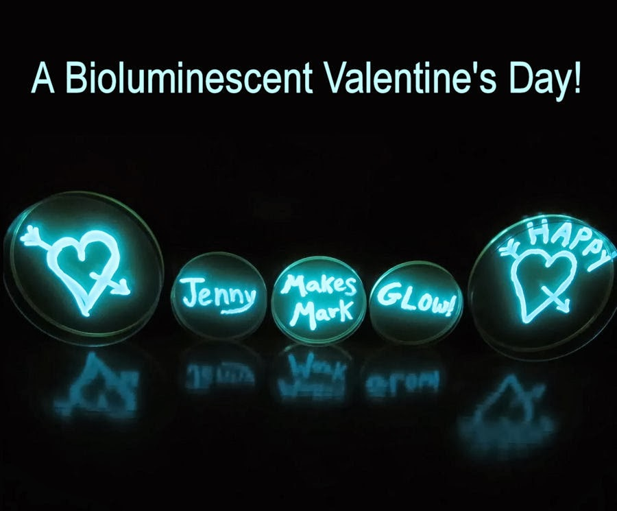 glowing bacteria lab essay 1 glowing bacteria purpose: to use your knowledge about genetic transformation to successfully transform e coli cells to produce green fluorescent protein background.