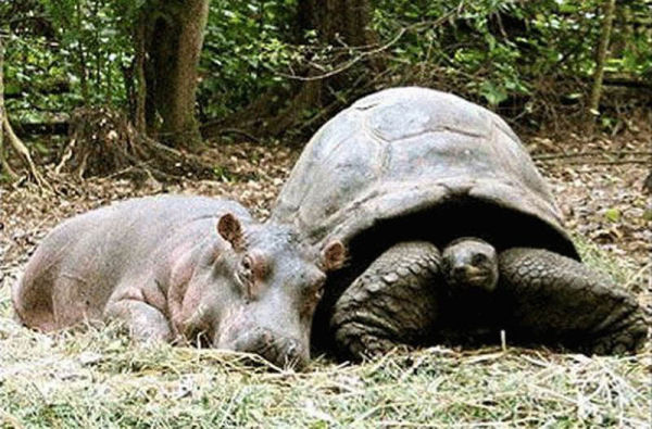 cool animals pictures most adorable animal pairings pictures