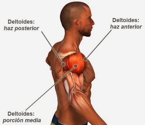 Pilates Marisa Rodriguez: Autoestiramiento del músculo deltoides