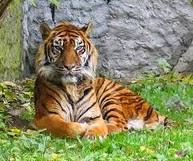 Cerita Legenda Harimau Lembah Harau Payakumbuh Sumatera Barat