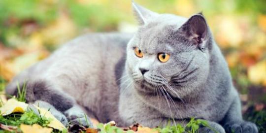 10 Kucing Termahal Badar Bara