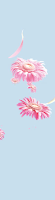 Roses, Fragrance, Ambi pur, Nimbu Paani, Rice, Tulsi, Memories, Nostalgia