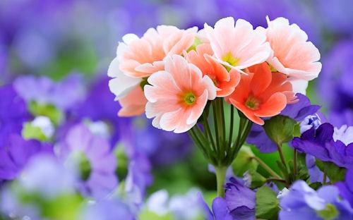 Fotos De Flores En El Campo - Imagenes De Flores En El Campo Imagenes de Flores