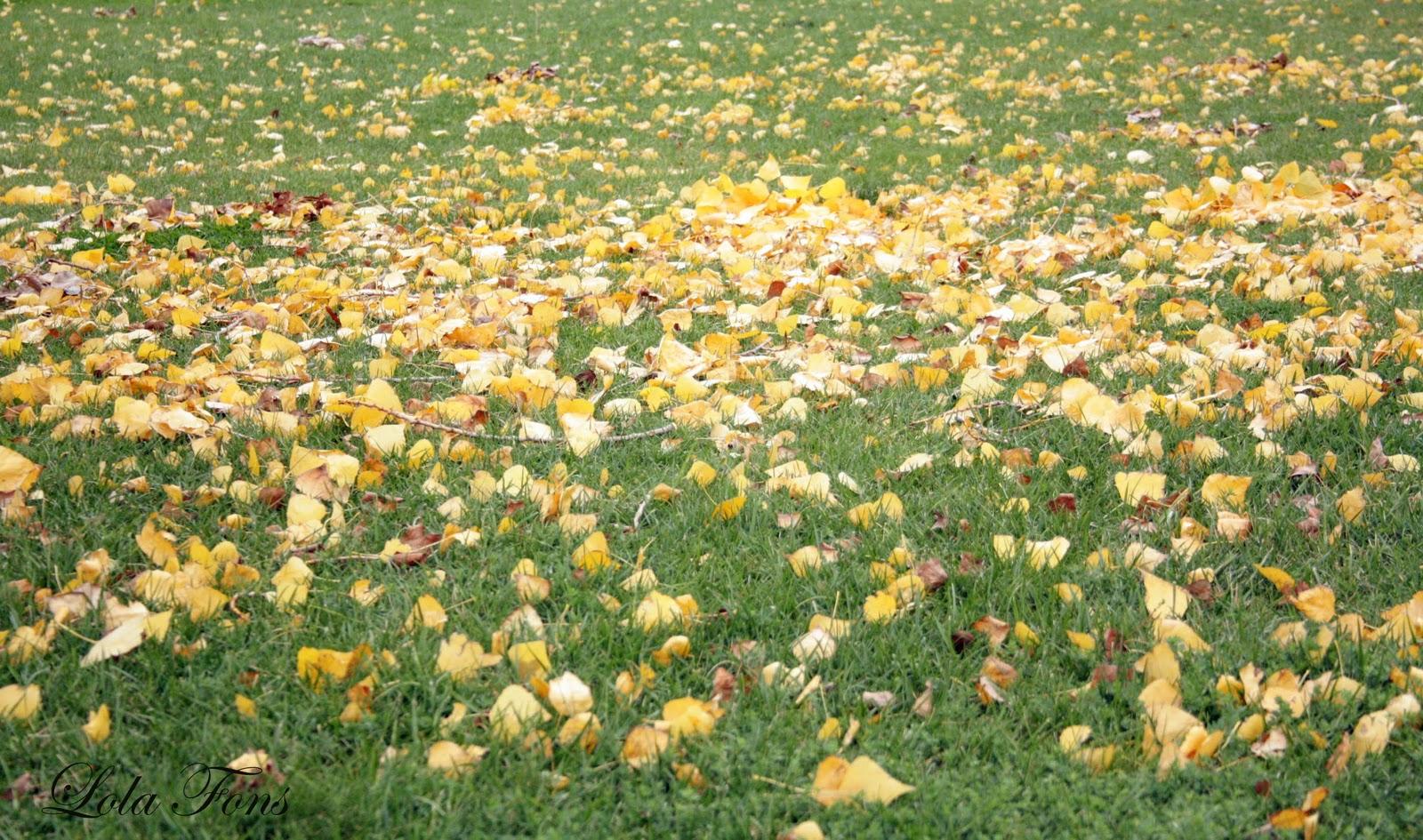 Pensando Jardines: EFECTO ALFOMBRA