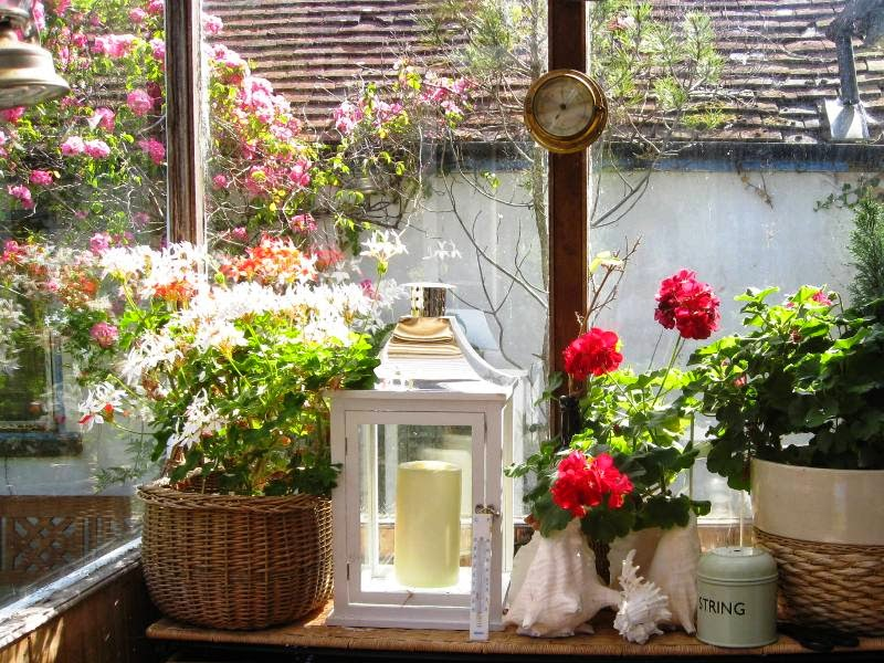 Plants and a lantern on a sunny windowsill