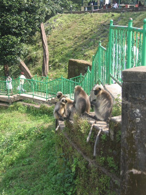 Monkeys in Jog