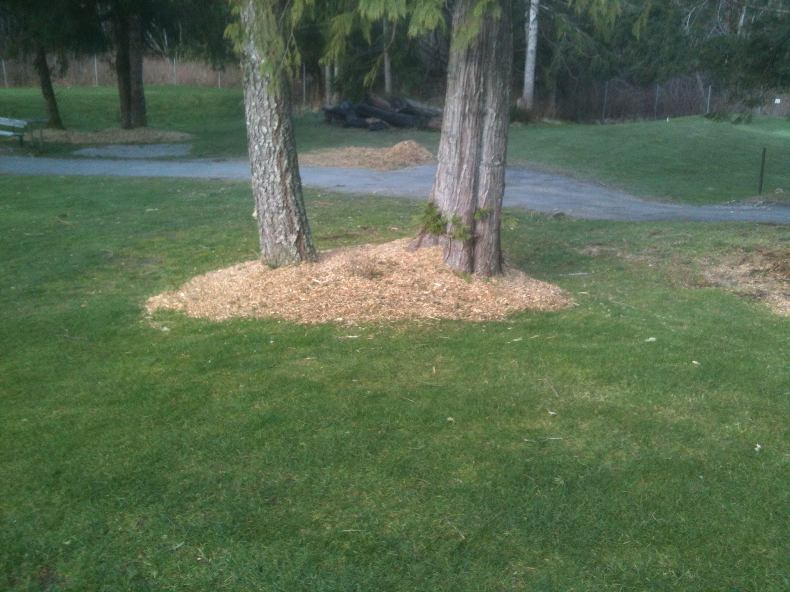 Turf Hacker Wood Chip Mulch Around Trees
