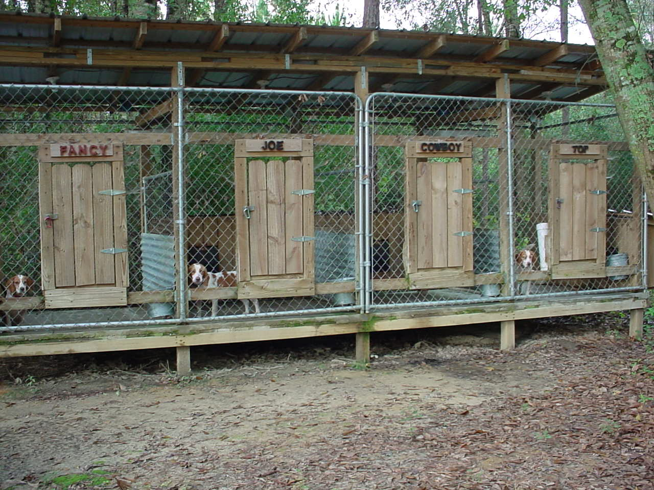 The real apbt september 2015 for Indoor outdoor dog kennel design