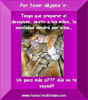 Imagenes Graciosas de Animales, Gatos Mimosos