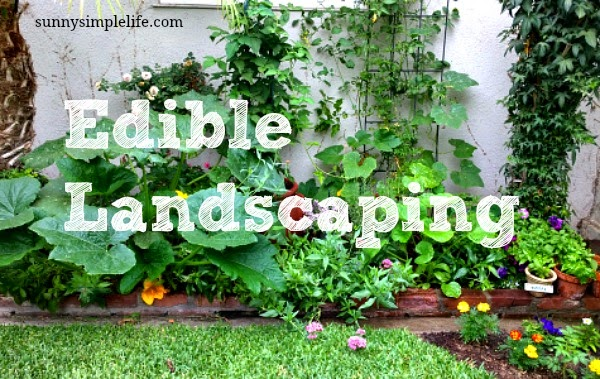 Landscaping With Edibles : Sunny simple life edible landscaping