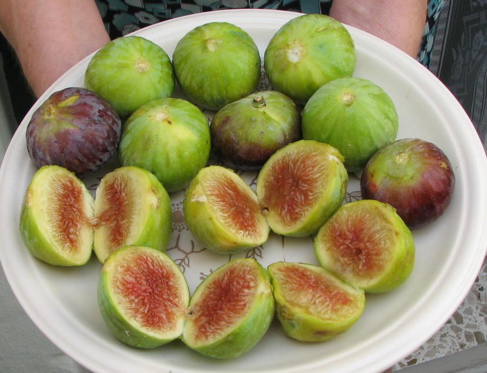 Summer Trees Fruit Malta 39 s Summer Fruits