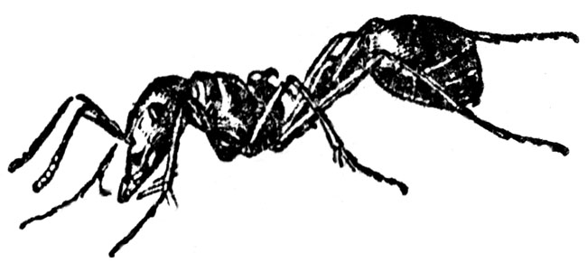 free three parts of an ant coloring pages