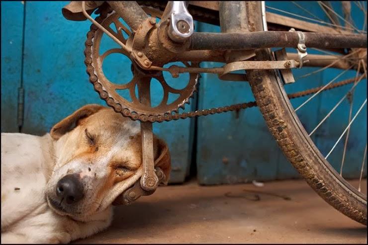 Qué vida más perra!!!