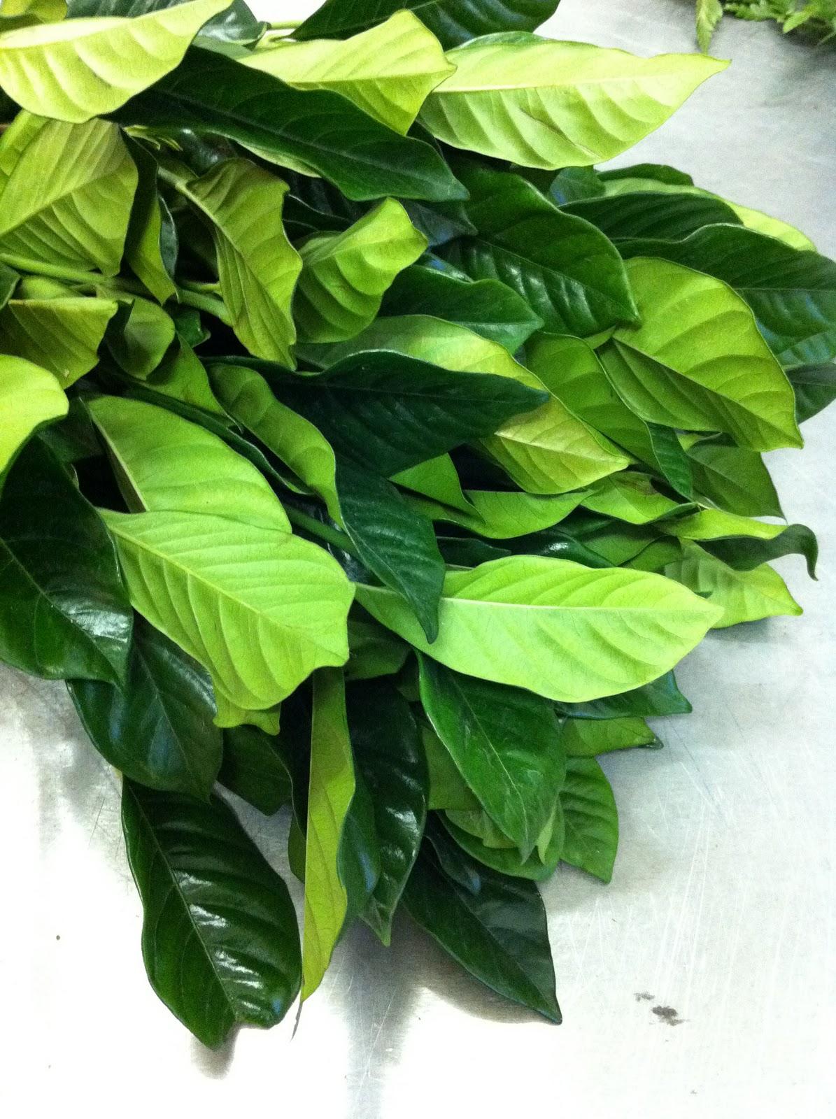 Blade New York Fresh And Green Foliage Arrangement