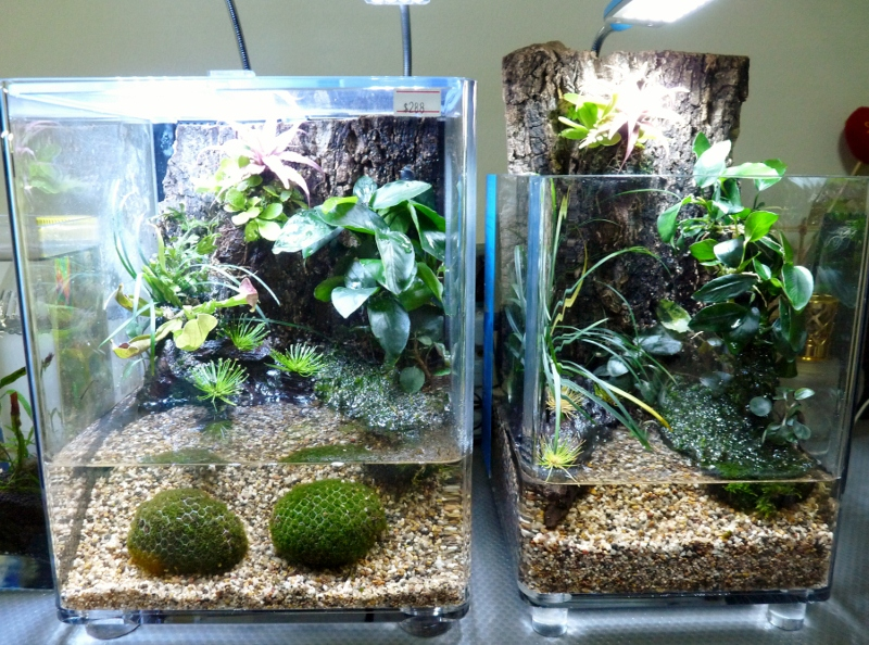 IQ3  amp  IQ5 Nano Paludarium Packages are out Nano Paludarium
