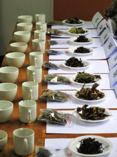 Lao tea samples at a cupping session, Photo credit:  Frank Miller and Eric Wong, Lao Forest Tea Project