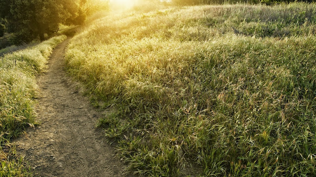 Lovely old path way HD Wallpaper