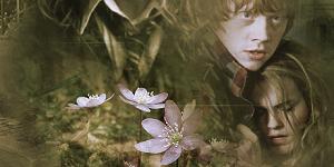 http://hermiona-ron-opowiadanie.blogspot.com
