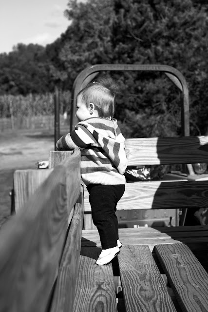 pumpkinpatch1+bw Pumpkin Patch! | Marlton New Jersey Photographer