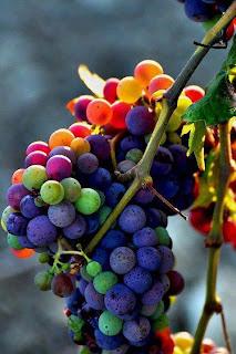 sexy  Black Grapes