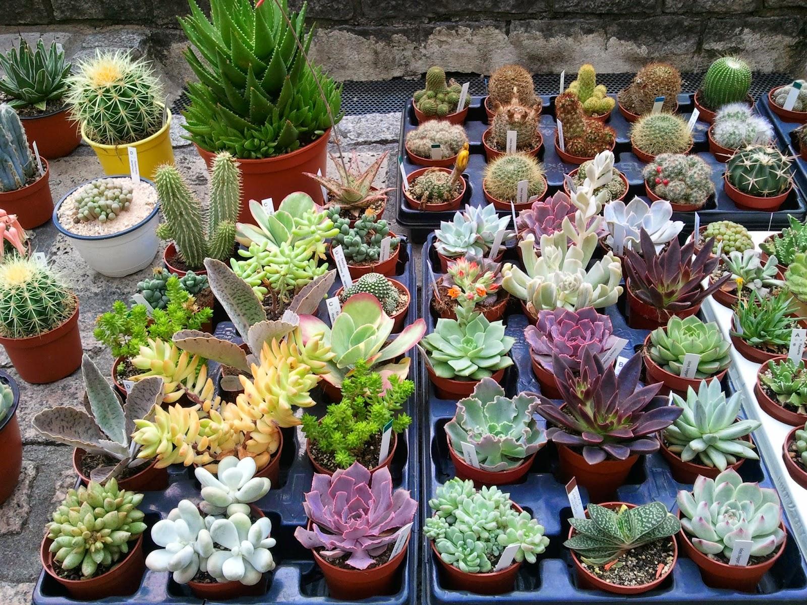 Landare azokak cactus islaya for Vivero de cactus