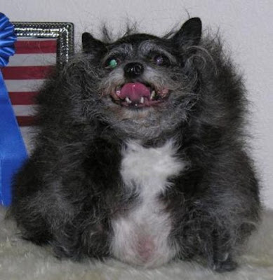 World ugliest dogs pictures