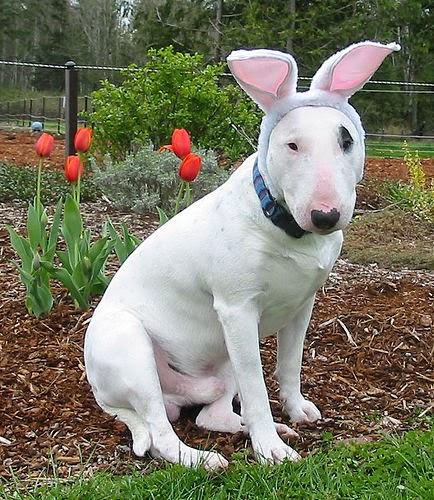 dogs in bunny ears