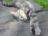 Una siesta reparadora